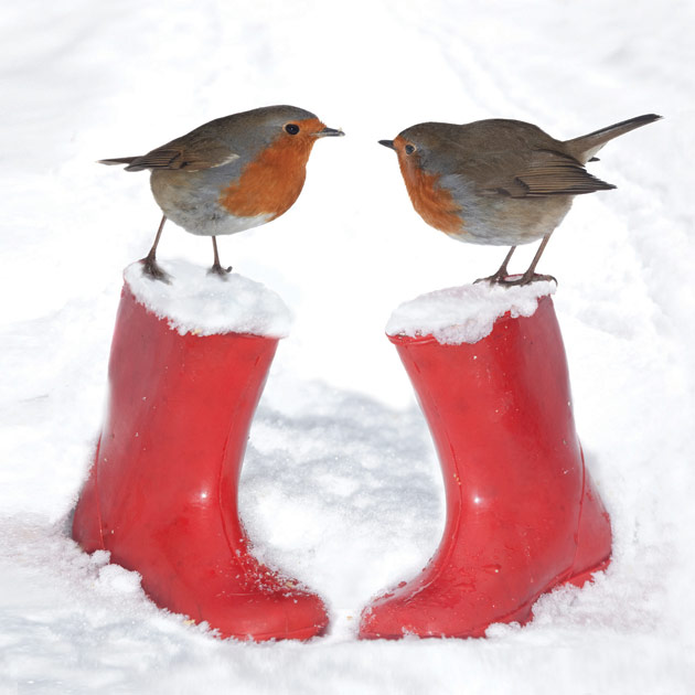 Winter Friends - Robins